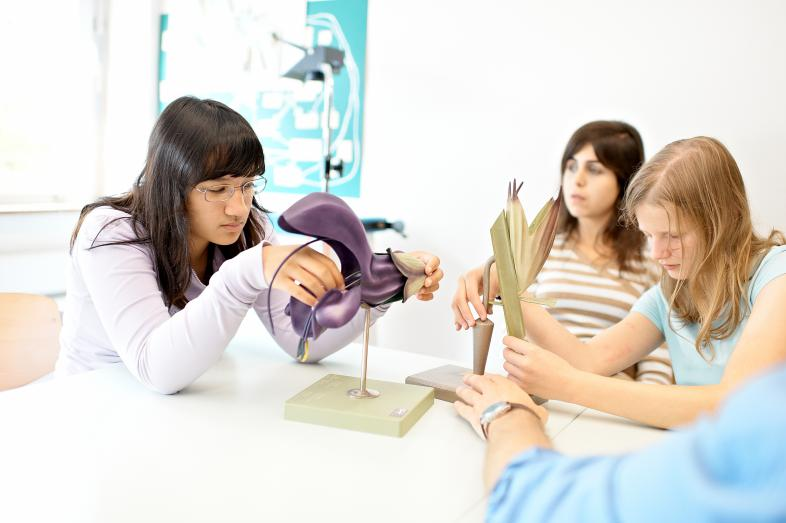 Drei Schülerinnen lernen mit Modellen aus der  Bioligie