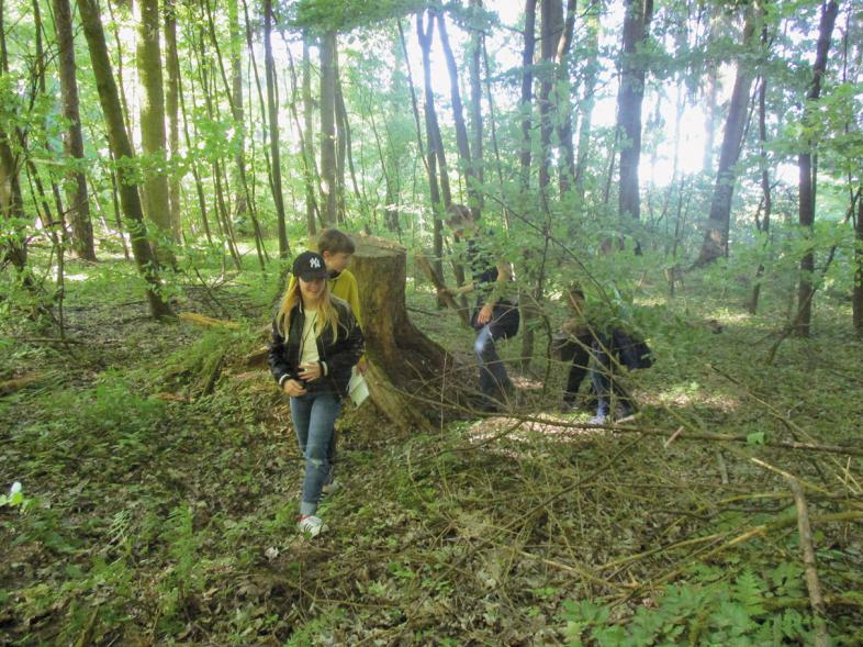 5 Teilnehmende wandern durch den Wald.