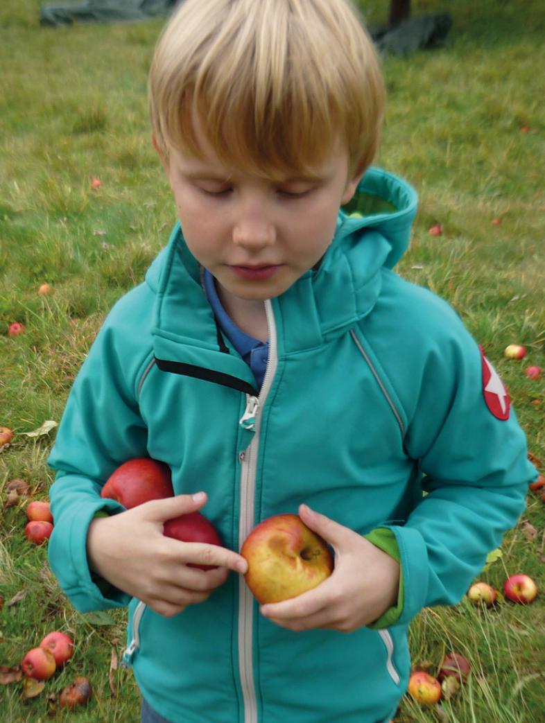 Ein Kind hält 3 Äpfel in seinen Händen