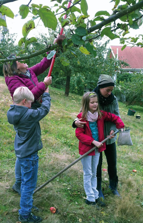 2 Kinder pflücken unter Anleitung von Erwachsenen Äpfel von einem Baum