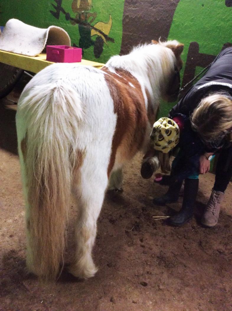 Ein Kind kratzt einem Pony in Begleitung der Reitlehrerin einen Vorderhuf aus.