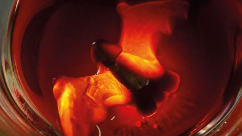 Ein aufgequollenes Gummibärchen in Form einer Fledermaus  in Kunstblut, von oben aufgenommen