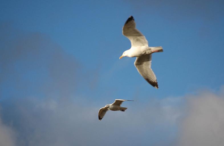 2 Vögel im Flug